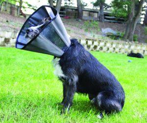 2017 Mejor alternativa de cono para perros