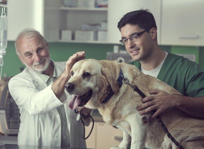 Signos de cáncer en los perros