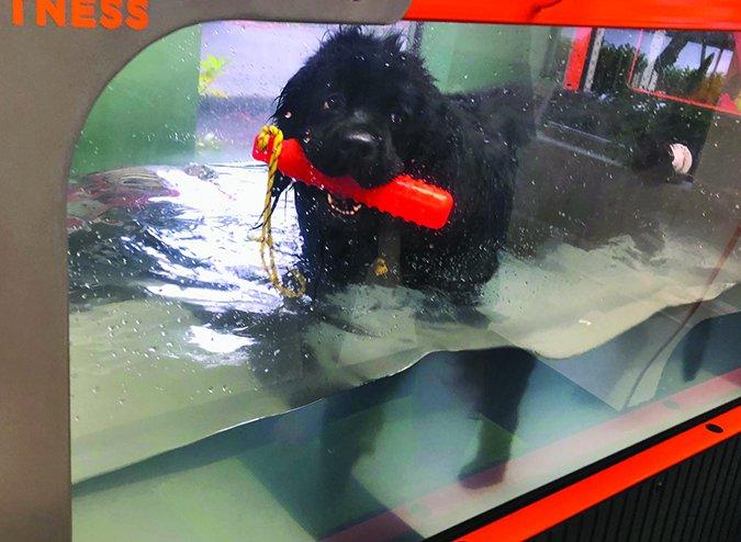 Cirugía de doble TPLO para perros