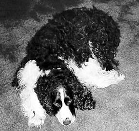 La medicina veterinaria tradicional mezclada con tratamientos holísticos