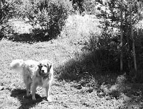 Proteja a su perro de las picaduras de garrapatas y de la enfermedad de Lyme
