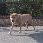 Reconocer los signos de la pérdida de apetito de su perro