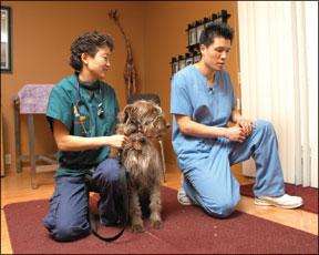 Visitas veterinarias menos estresantes
