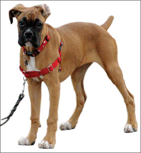 Noticias y eventos actuales sobre la salud canina