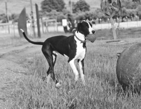 Bloqueo de perro: Causas, signos y síntomas
