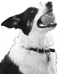 La boca de tu perro