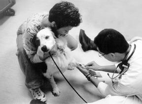 Haga la prueba del título antes de administrar las vacunas