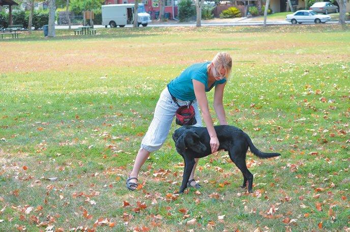 Prevención de las lesiones por ejercicio para su perro mediante el calentamiento y el enfriamiento