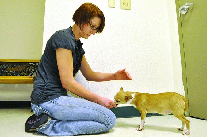 Cómo examinar correctamente a su perro