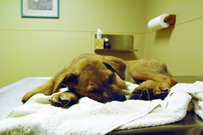 Parvovirus en los perros: Qué es y cómo prevenirlo