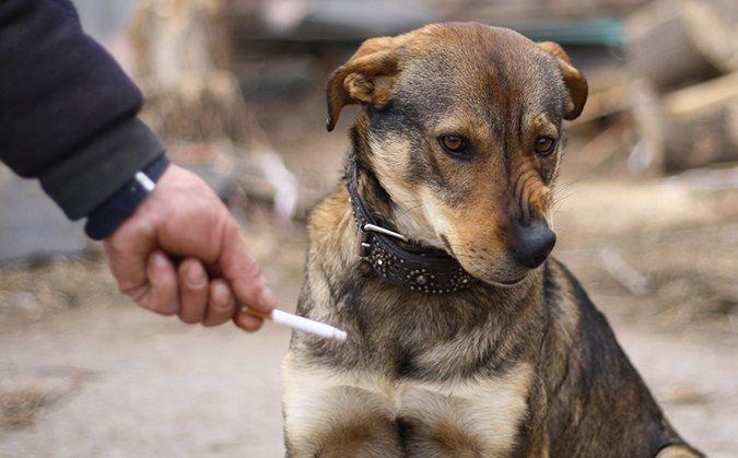9 cosas que hacer si su cachorro tiene tos de la perrera
