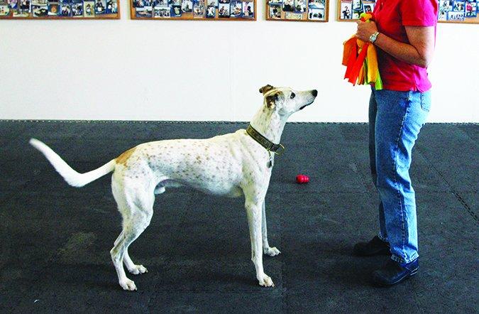 Ligamentos cruzados rotos en los perros