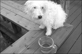 Los muchos beneficios de la caléndula para su perro
