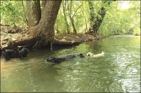 Lecciones de natación canina: El ejercicio perfecto para su perro