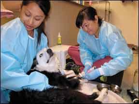 Quimioterapia para perros: qué esperar