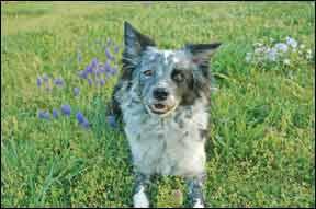 Las mejores opciones de tratamiento para los lipomas caninos