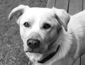 El sentido del olfato canino