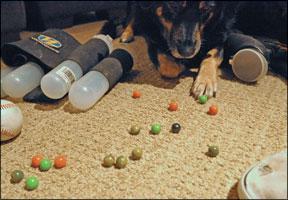 Noticias y Actualidad de la Salud Canina Diciembre 2009