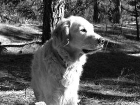 Acupresión postoperatoria para perros con displasia