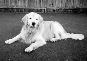 Tratamientos holísticos para el sarpullido canino