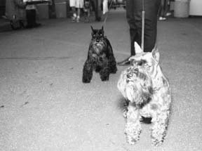 Análisis de orina canina