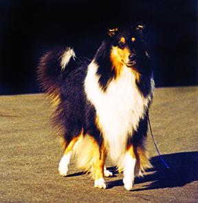 Perros con la mutación MDR1: Sensibilidad a las drogas
