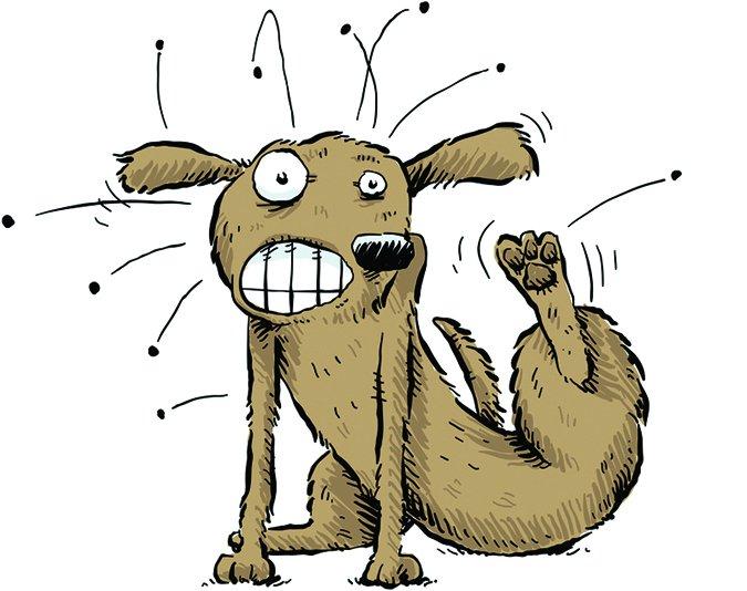 Medicina antipulgas de venta libre para perros