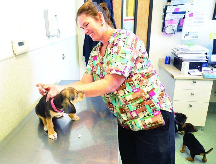 El trato con las inyecciones de los cachorros