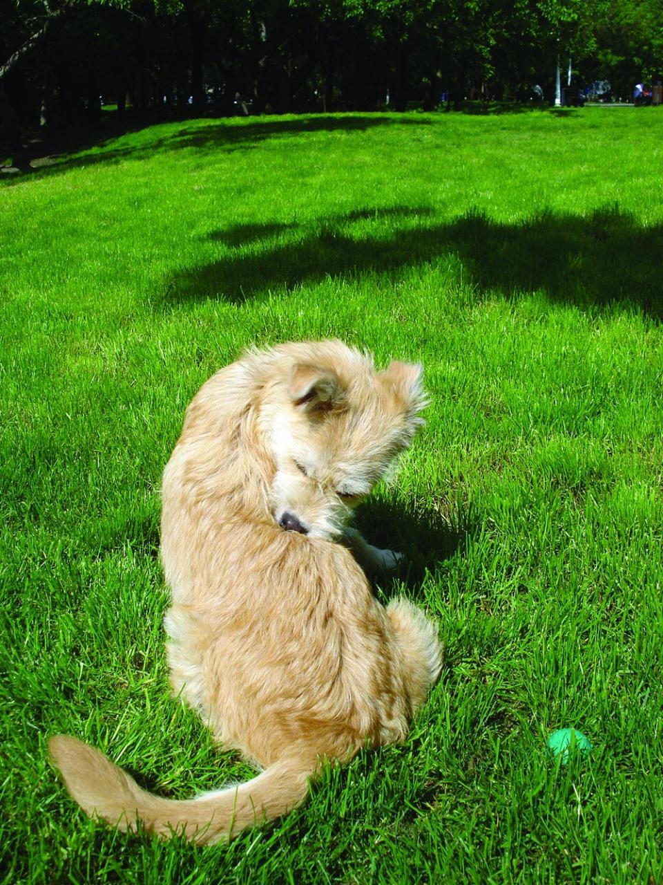 Dermatitis Atópica Canina