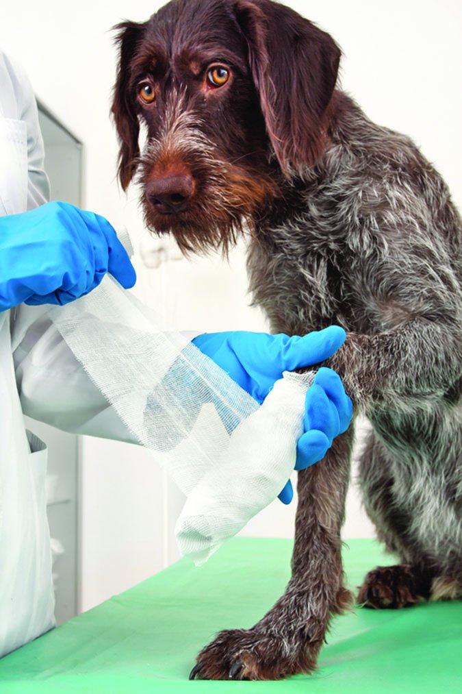 Cortes y raspaduras en las patas de los perros: Cómo tratar una lesión en las patas