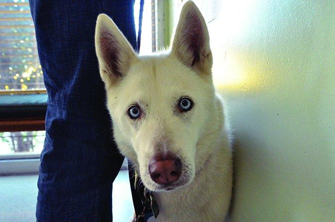 Visitas al veterinario: Es importante estar ahí para su perro