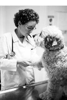 Tomando medidas para que las visitas al veterinario sean menos estresantes para su cachorro