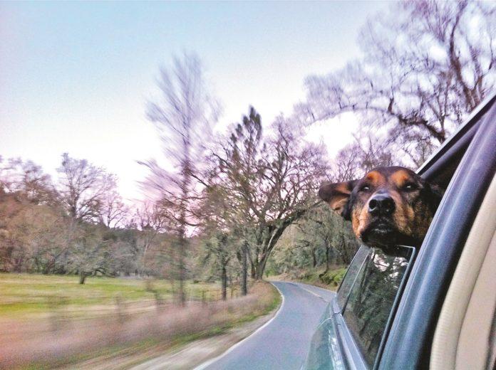 Calidad de vida para su perro y para usted