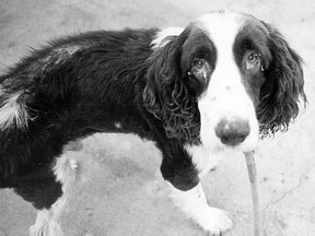 Comprensión de las alergias caninas