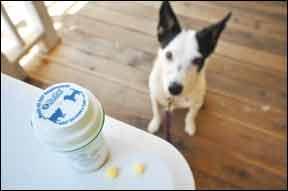 Cómo hacer que su perro tome sus píldoras