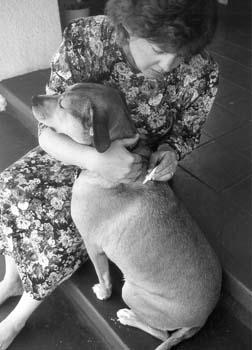 El cuidado convencional del cáncer canino