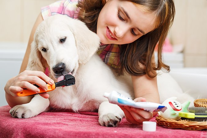 Pasta de dientes para perros: ¿Es necesaria?